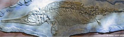 Fossile ichtyosaurus