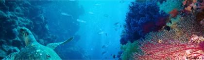 Fond marin